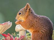 可爱的森林小松鼠壁纸图片