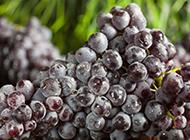 一大串的新鲜葡萄图片