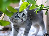户外抓拍可爱小猫咪壁纸