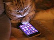 玩手机的猫搞笑图片