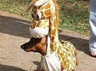 动物爆笑图之短腿长颈鹿