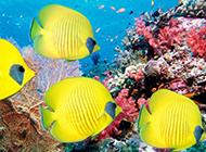五彩斑斓的海底世界图片素材