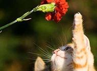 猫咪搞笑动物图片之情人