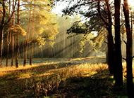 精选森林树木高清护眼壁纸