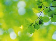 春天绿色清新的树叶背景图