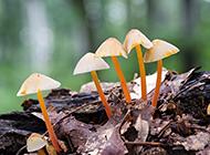 绿色森林雨后蘑菇摄影高清壁纸