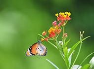 梦幻春天蝴蝶鲜花唯美背景壁纸图片