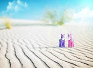 清新素雅沙滩小马娃娃背景图片