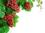 新鲜的葡萄背景图片素材