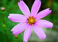 最新精美护眼花卉壁纸图片