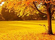 秋天的风光高清电脑桌面壁纸