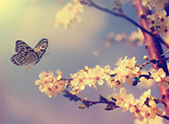 唯美淡雅的蝶恋花背景图