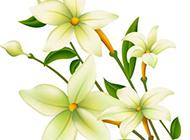 清新的百合花背景图片