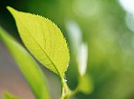 初春绿色清新绿叶植物背景素材