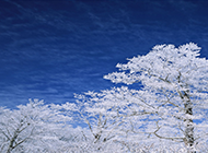 冬季唯美护眼雪景电脑桌面壁纸