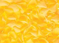 黄色玫瑰花瓣唯美背景图片