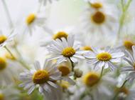 高清精美花卉壁纸图片大全