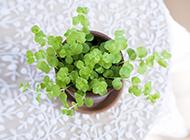 春天绿色植物小清新意境风景图片