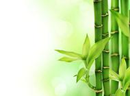 绿色的竹子唯美简约高清背景图