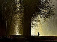 迷离的云雾缭绕森林日出壁纸