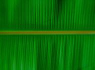 绿色香蕉叶ppt背景图片