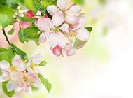 唯美淡雅花卉背景图片