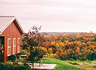 唯美秀丽大自然秋天森林风景壁纸图片