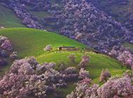春天风景迷人的绿色山川草原图片