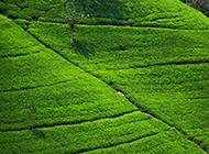 清新的大自然绿色草原风景壁纸