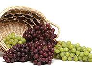 秋天丰收的葡萄图片