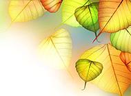 秋天意境树叶背景图片