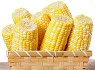 秋天丰收的玉米图片