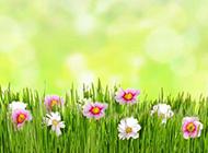 明媚的阳光草地鲜花图片