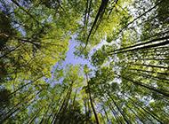仰拍的绿色森林唯美图片
