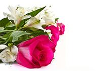 素雅美丽的情人节唯美花