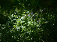 乡间小路好看的野花图片