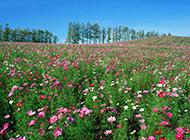 满山好看的野花摄影图片