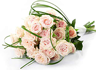 清新素雅的粉色玫瑰花花
