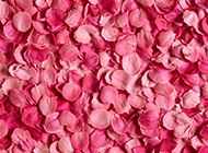 清新淡雅粉玫瑰背景图片
