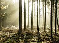 秋天的森林唯美意境图片