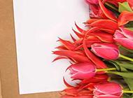 一束漂亮的郁金香图片欣赏