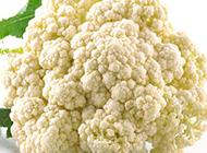 可食用的白花椰菜图片