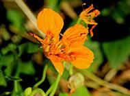 好看漂亮的盆栽花卉图片