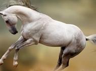 奔跑豹图片 奔跑中的马图片