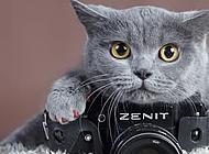 豹图片 可爱小猫图片