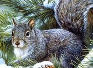 雪地犬图片 雪地松鼠图片