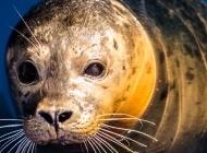 小海豹图片 海豹图片