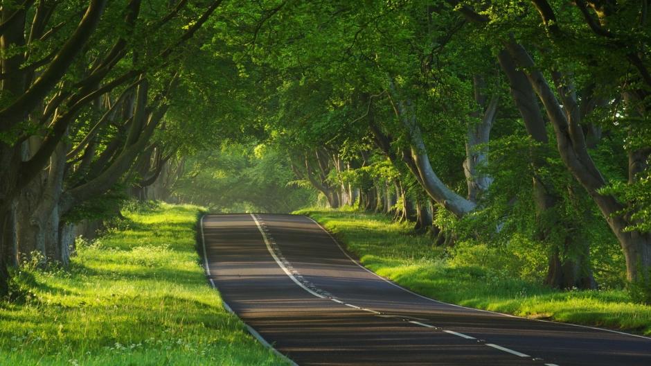 林间小溪水图片 世上最美的秋天林间小路图片