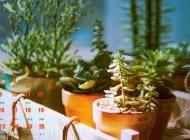 2015年7月日历唯美仙人掌绿色护眼植物高清电脑壁纸下载