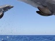 海面上跳跃的可爱海豚精美摄影图片